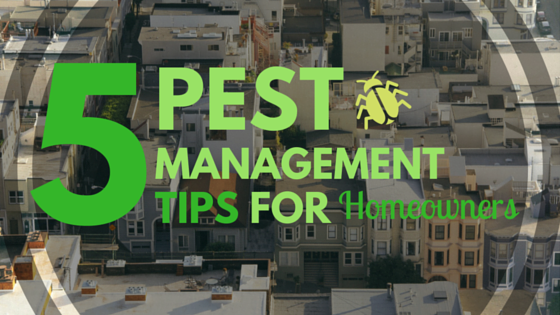 Pest Management Tips
