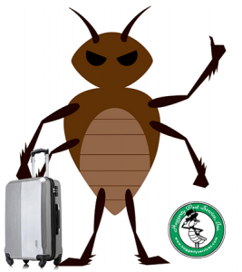 Bed Bug extermination Boca Raton, Palm Beach